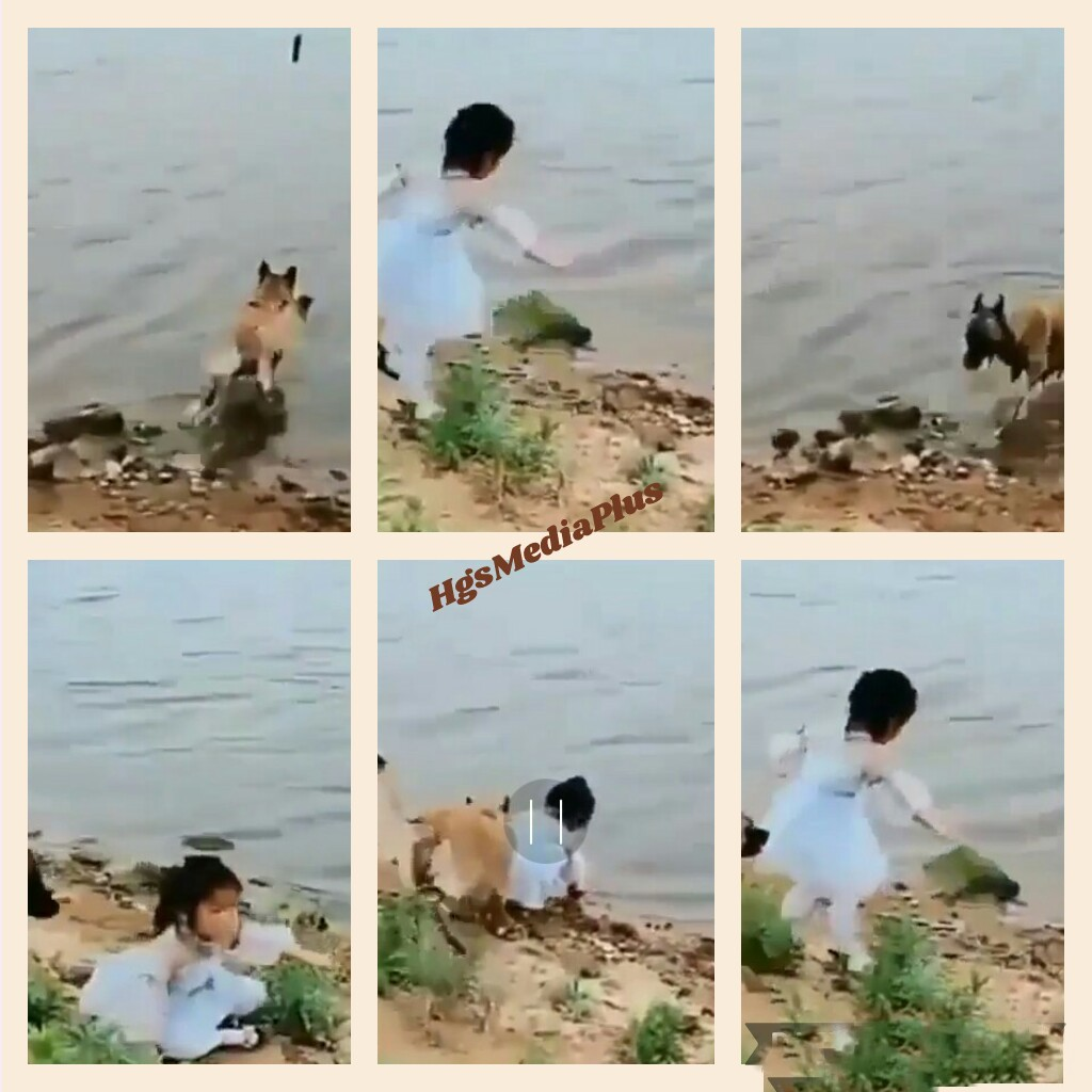 Dog Rescues Little Girl, Saves Her From Getting Drowned-3595